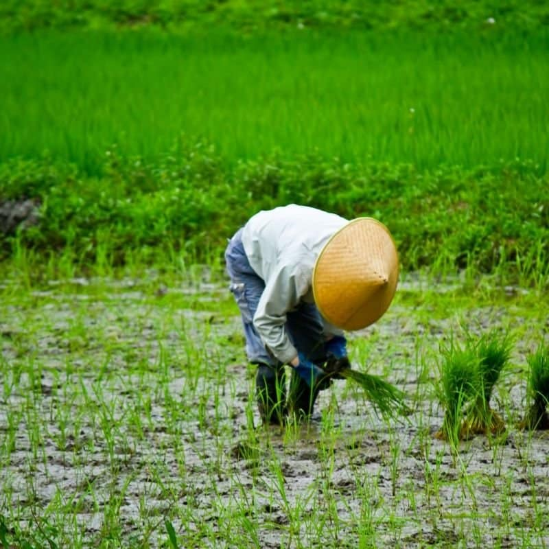 4/15(木)オンライン・土にこだわった農家、美し農園と語ろうのイメージその3