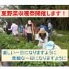 夏野菜収穫祭 旬の野菜を食べよう!