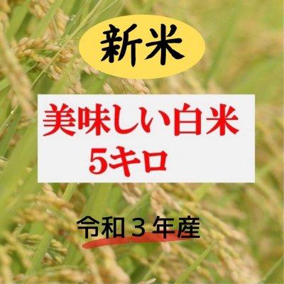 新米・白米 5㎏   ★コシヒカリ★ 安心、安全な農法!