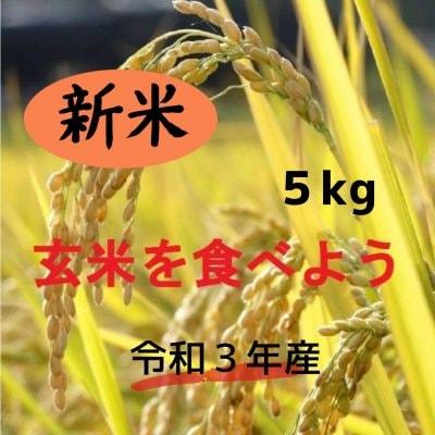 新米・玄米 5㎏   ★コシヒカリ★ 安心、安全な農法!期間限定!