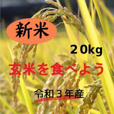 新米・玄米20㎏   ★コシヒカリ★ 安心、安全な農法!期間限定!