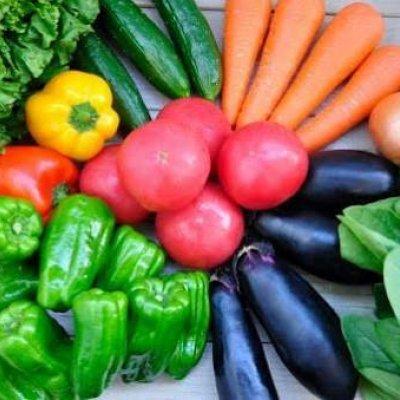 【送料無料】新鮮野菜!何が届くかお楽しみ
