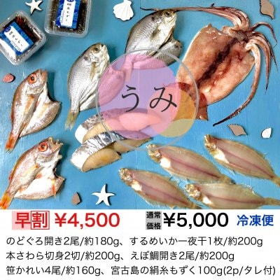 夏ギフト【海】のどぐろ、するめいか、本さわら、えぼ鯛、笹かれい、絹糸もずく
