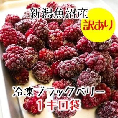 【訳あり処分】新潟魚沼産ブラックベリー1kg/加工用|冷凍