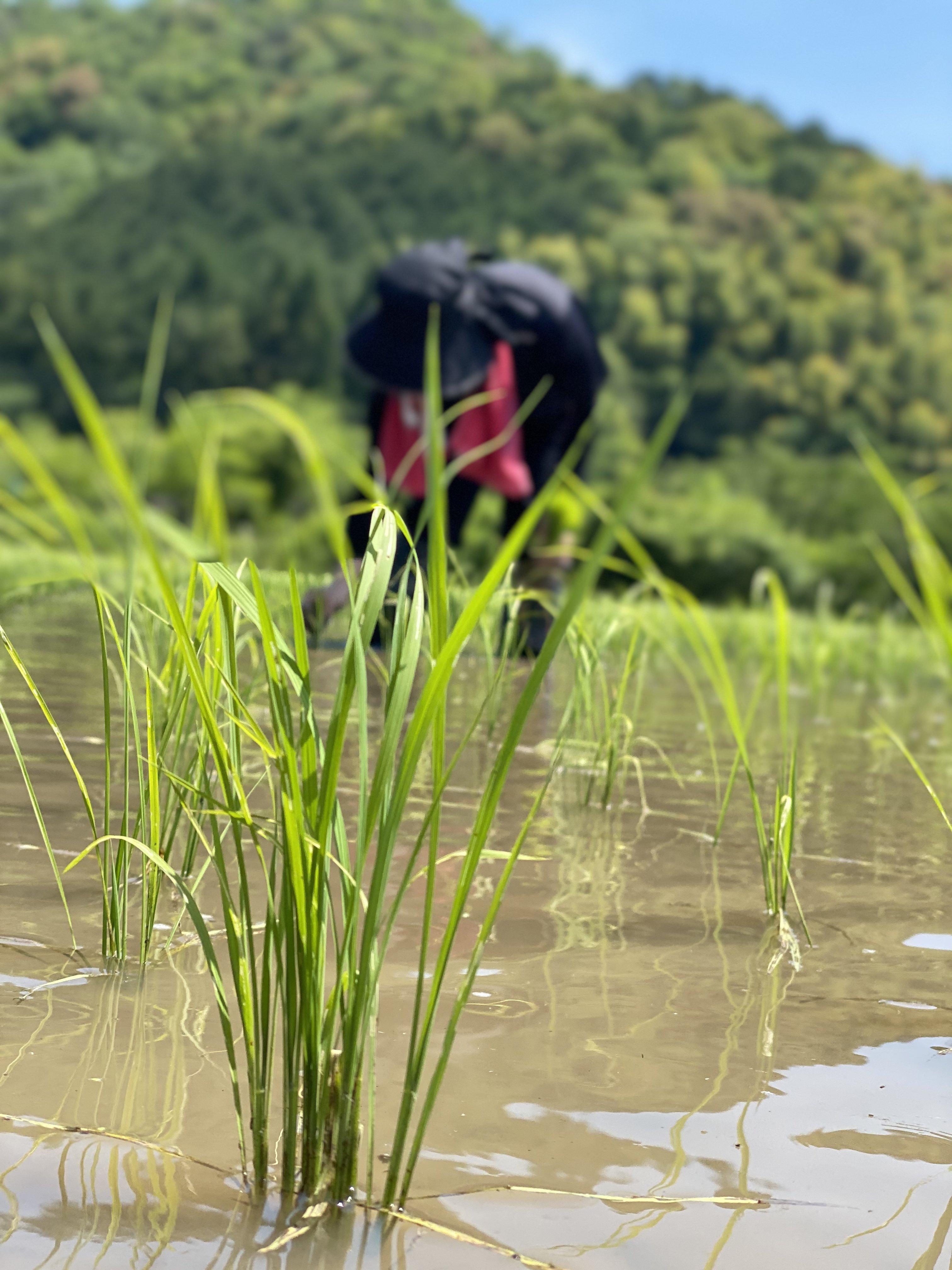 米採り大作戦!!スタンダードコースのイメージその1
