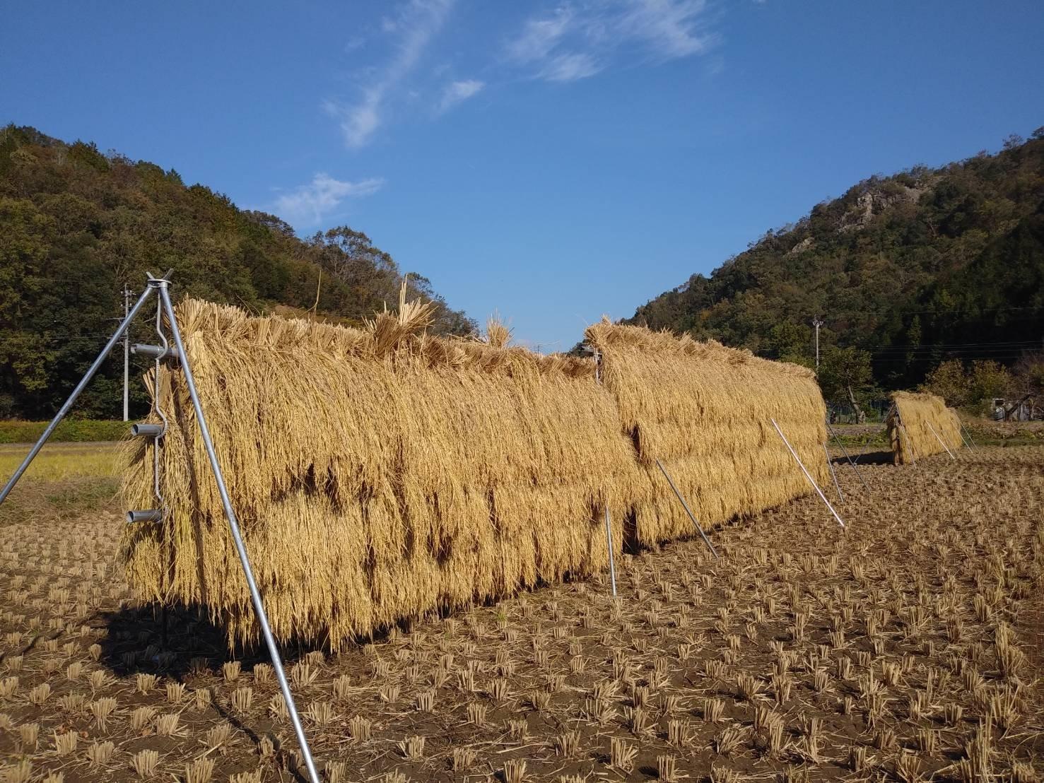 米採り大作戦!!スタンダードコースのイメージその4