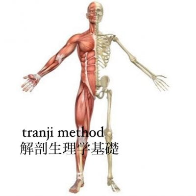 tranjimethod解剖生理学基礎講座