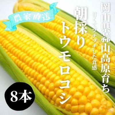 注文受付中!高原とうもろこし8月中の限定発売!L・2Lサイズ8本入り朝...