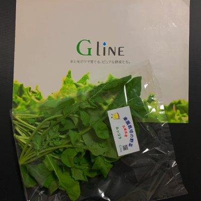 無農薬で安心人工光型植物工場のお野菜現地受取販売ルッコラ