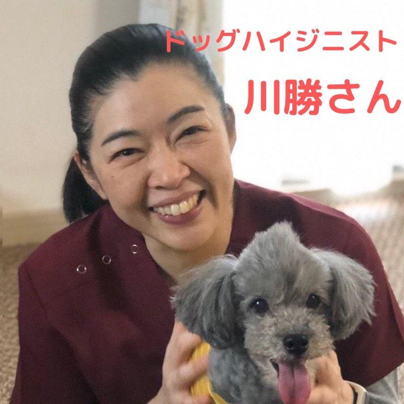 10月4日 午後の部 犬の無麻酔歯石除去 施術予約券のイメージその2
