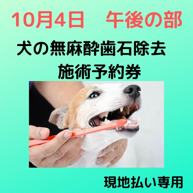 10月4日 午後の部 犬の無麻酔歯石除去 施術予約券のイメージその1