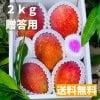 《贈答用》今帰仁マンゴー 2kg(5〜6玉)