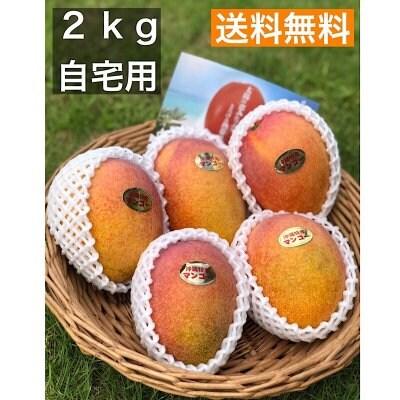 《自宅用》今帰仁マンゴー 2kg(5〜6玉)