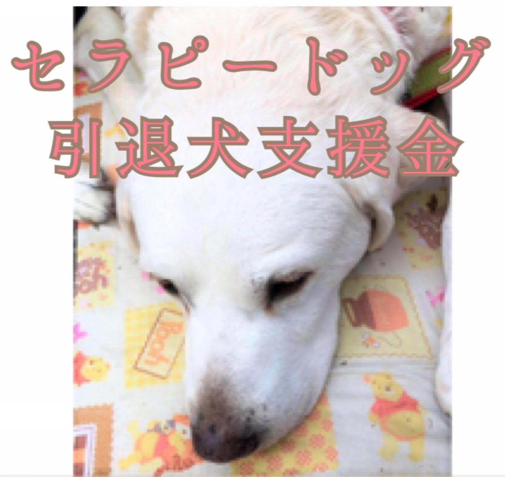 セラピードッグ、引退犬を支援のイメージその6