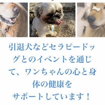 セラピードッグ、引退犬を支援