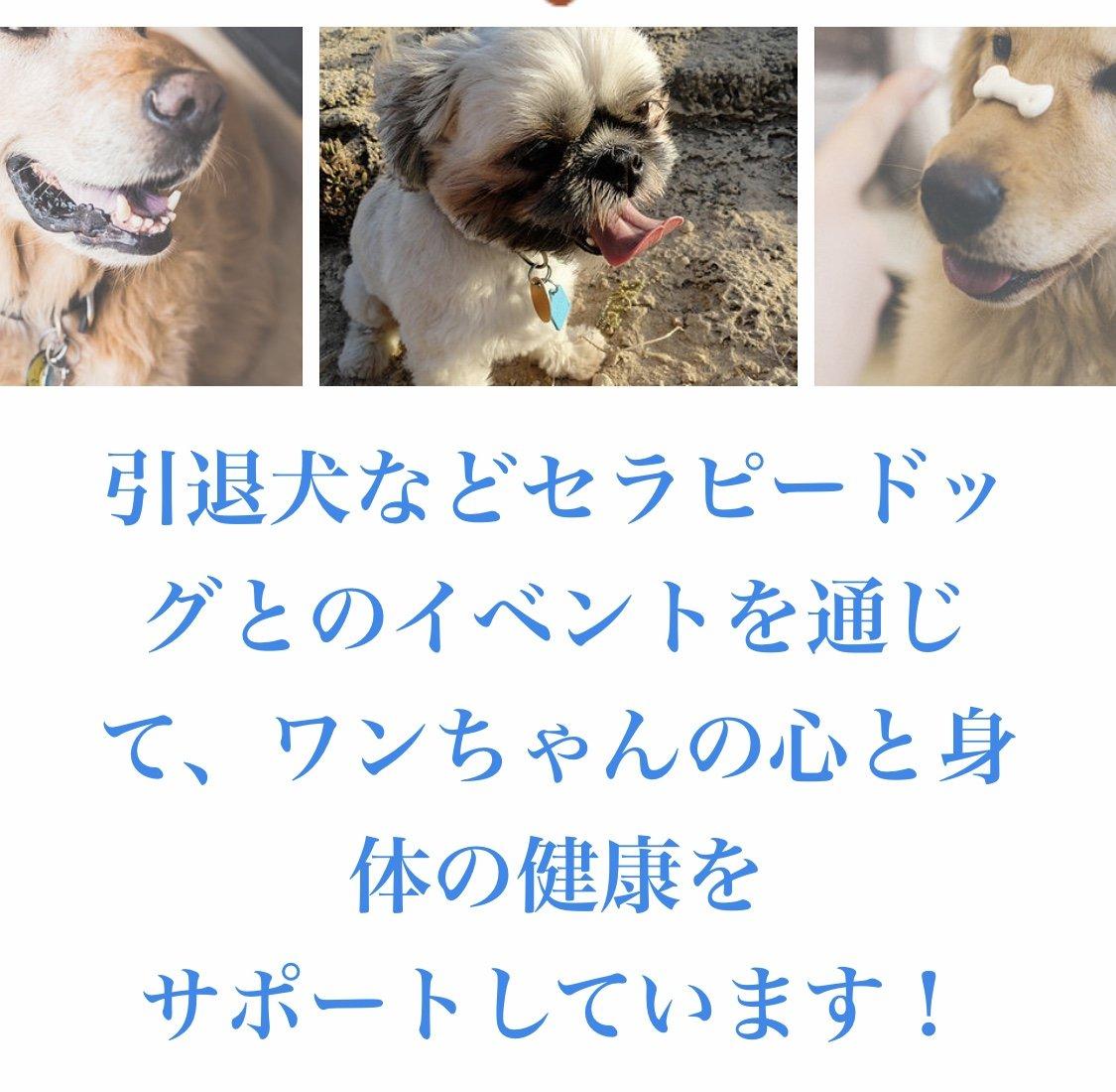 セラピードッグ、引退犬を支援のイメージその1