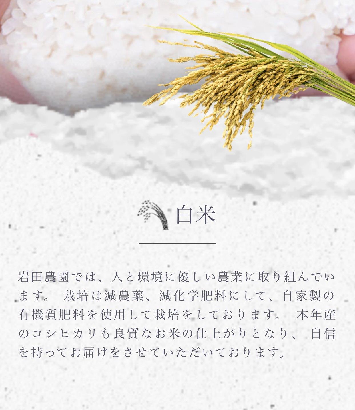 備長炭で焼く‼️炭家の焼き鳥弁当(仁多米コシヒカリ)のイメージその2