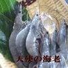 高級料亭使用 天使の海老 1kg箱 30尾~40尾ご購入いただいたお客様より美味しい!と評判の海老です。フライ・天ぷら・エビチリ・カルパッチョ等で是非お召し上がり下さい。