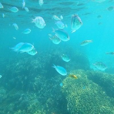 カラフルな熱帯魚たちに逢いに行く!!SUP体験&シュノーケルコース【写真撮影付き】