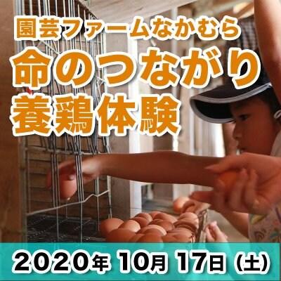【10/17チケット】 親子で行こう! 食・命の繋がりを学ぶ3時間の養鶏体験