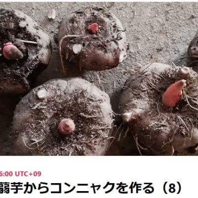 自然栽培の蒟蒻芋を使ってのコンニャク作り 第8回