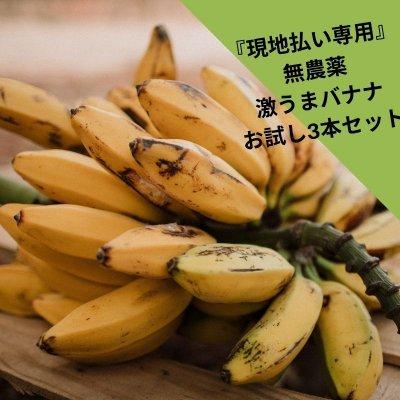 現地払い専用 無農薬栽培 沖縄県産バナナ