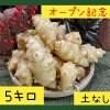 〜オープン記念〜菊芋5.0kg【土無し / 送料無料】
