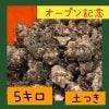 〜オープン記念〜菊芋5.0kg  【土付き / 送料無料】