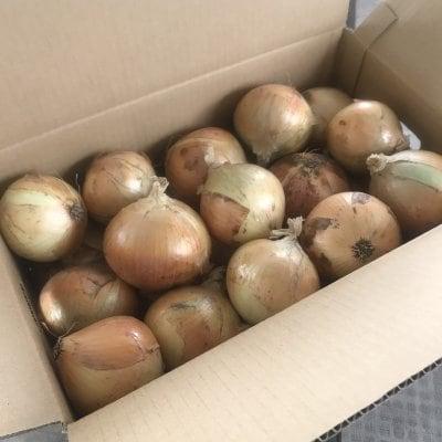 淡路島玉ねぎ(サイズ混)10kg/送料込