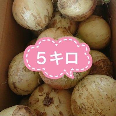 【ご予約】2021年淡路島新玉ねぎ/約5kg(15個前後サイズ混)