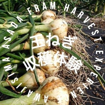 玉ねぎ収穫体験【平日】10時〜12時/農業交流/大人のみOK/親子OK/学生OK
