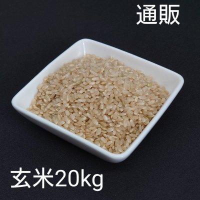 令和3年新米20kg玄米【彩のかがやき】予約販売スタート