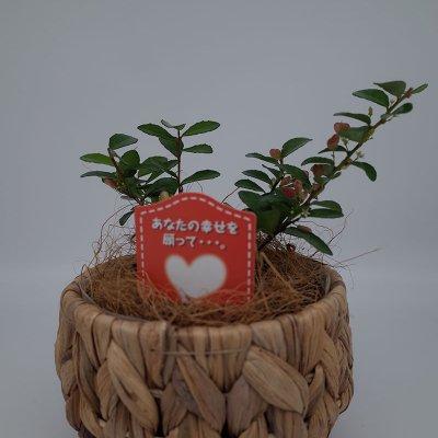 【新商品】ハートの生る木(ハートツリー)