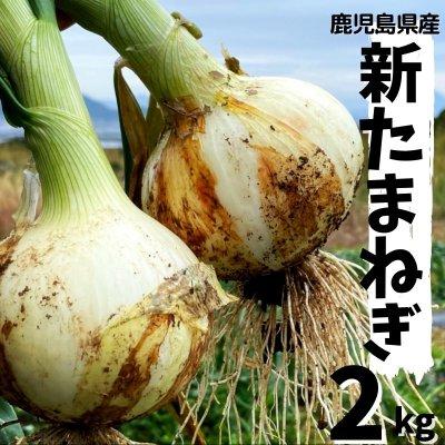 【鹿児島県産】今が旬!新たまねぎ 2kg