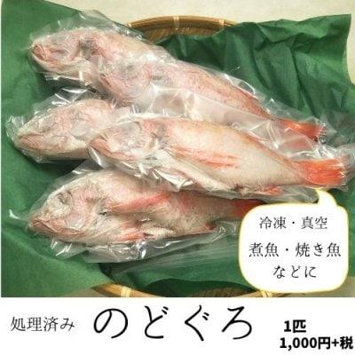 オープン記念!白いか1杯プレゼント付き★【処理済み】解凍するだけ!日...