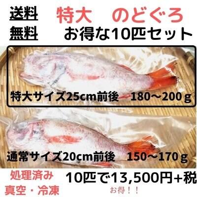 【送料無料】特大サイズの10匹セット!日本海の高級魚「のどぐろ」25cm...