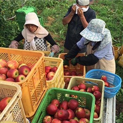 [10,000円]プロジェクト応援コース 農家さんの廃棄するりんごの買い取りにご支援をお願いします!