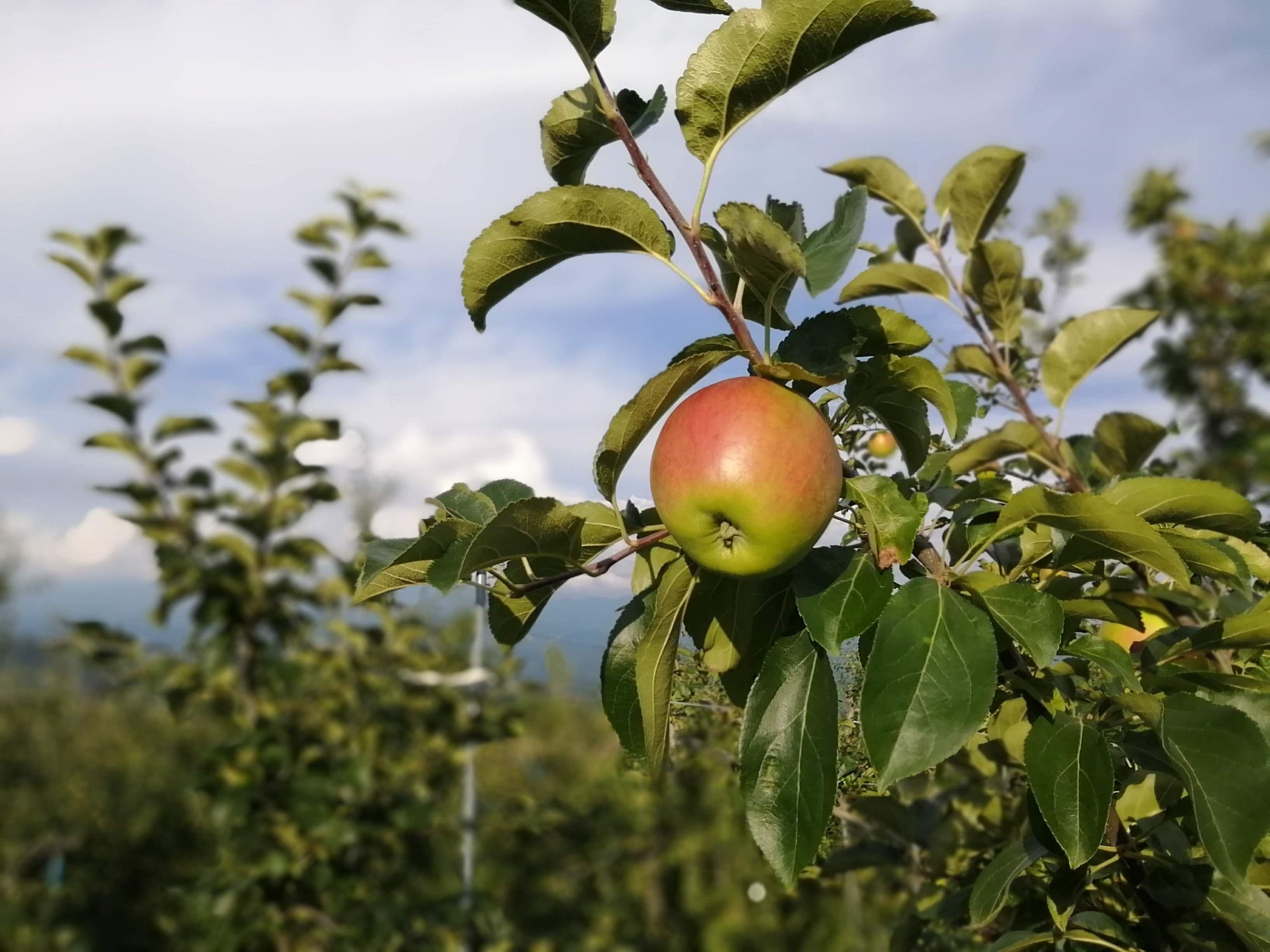 [5,000円]プロジェクト応援コース 農家さんの廃棄するりんごの買い取りにご支援をお願いします!のイメージその2