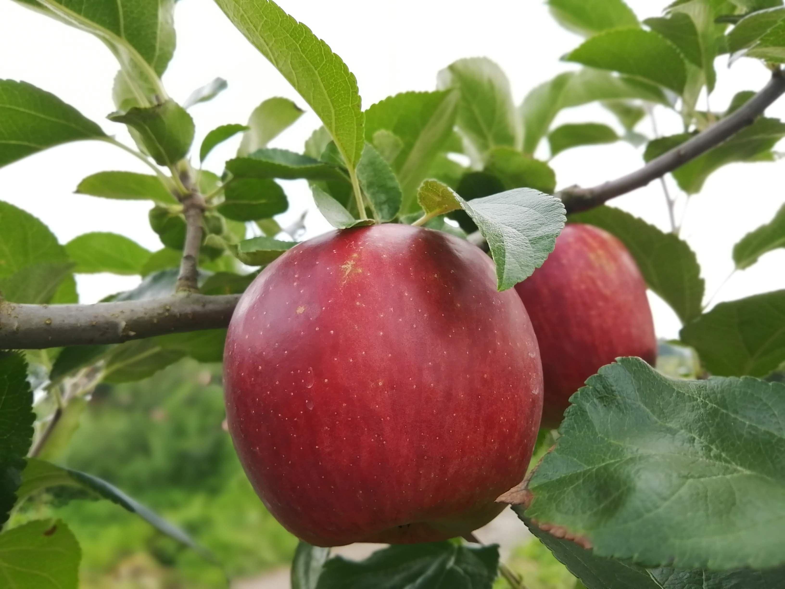 [5,000円]プロジェクト応援コース 農家さんの廃棄するりんごの買い取りにご支援をお願いします!のイメージその1