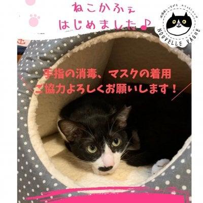 【予約制】おひとり様OK!保護猫かふぇ貸切りプラン(60分)ドリンク1杯付き