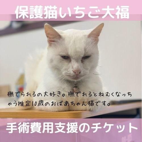 【保護猫医療費支援】保護猫いちご大福 乳腺腫瘍摘出手術費用のイメージその1
