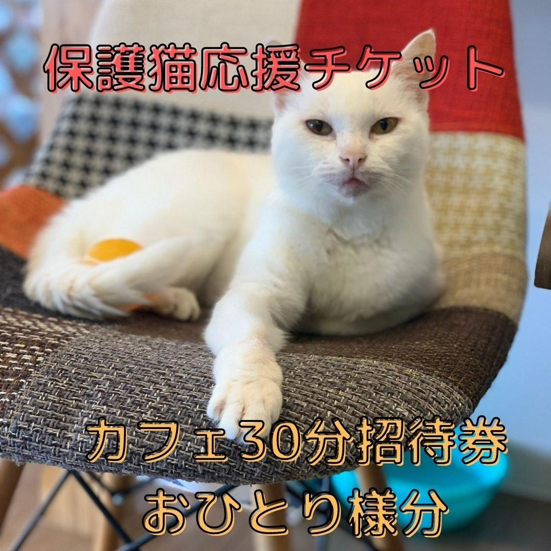 【保護猫応援チケット】1000円  ※カフェ30分無料体験付き のイメージその1