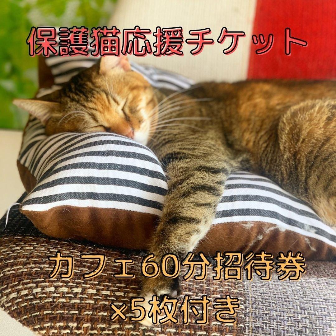 【保護猫応援チケット】5500円 ※60分無料招待券5枚付きのイメージその1