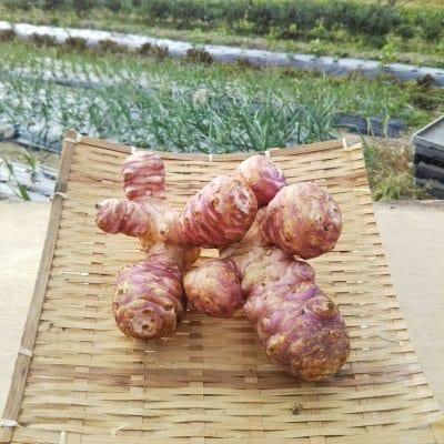 ★送料一律★【無農薬・自然栽培】紫菊芋 -250g-