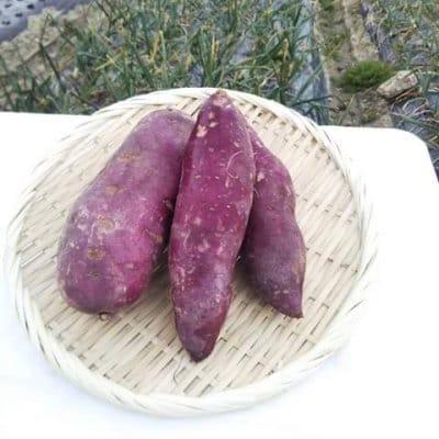 ★送料一律★【無農薬・自然栽培】紫さつま芋 -550g-