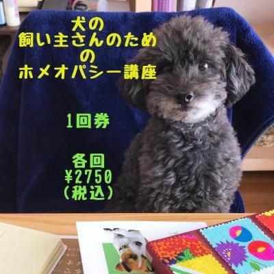 犬の飼い主さんのためのホメオパシー講座 1回券