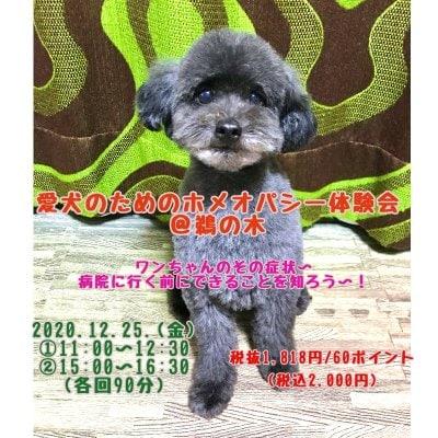愛犬のためのホメオパシー体験会 at 鵜の木ファンシーズン