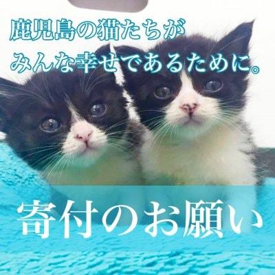 【本日23時59分まで!】かごしま猫たちの幸せな生活のために。寄付のお願い(100円から寄付できます)