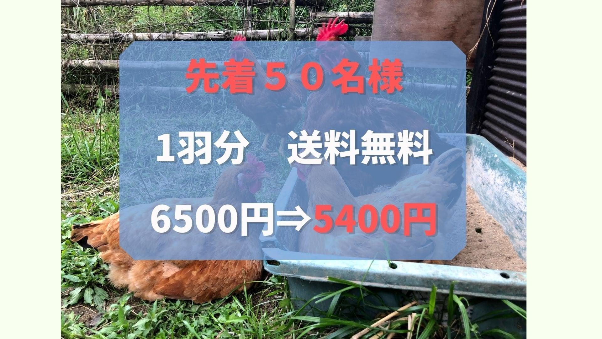 【予約販売・応援チケット】廃墟と廃材を使った放し飼い養鶏場設立、サスティナブルチキンを育てたい!たびちゃんファーム 放し飼いチキン1羽分 【先着50名様限定価格】のイメージその5