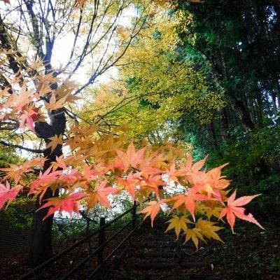 ひろしま横あるき「映える秋」10月8日(金)コースリクエスト(ご相談に応じます)